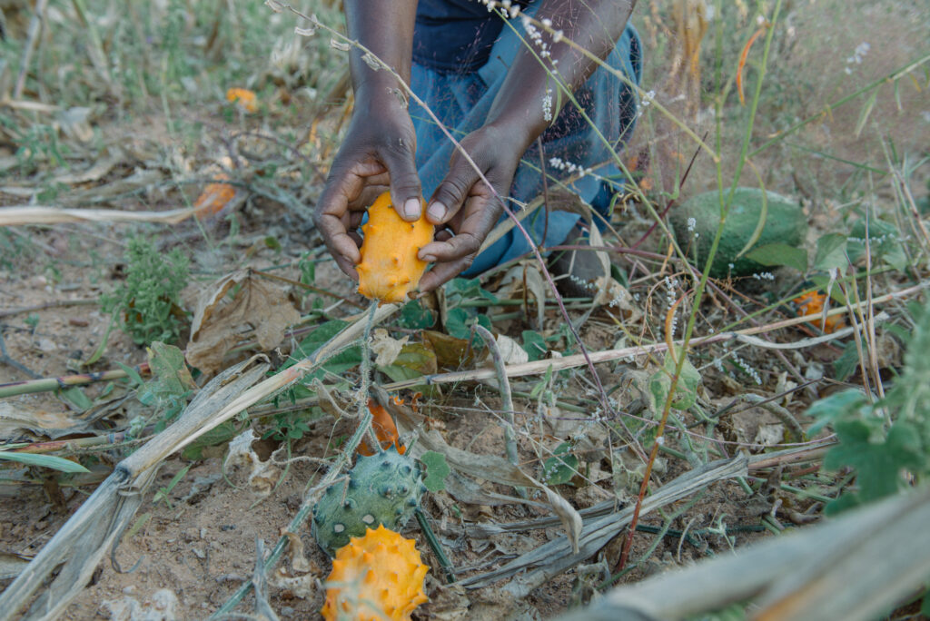 Farming for Justice: Agroecology in Action